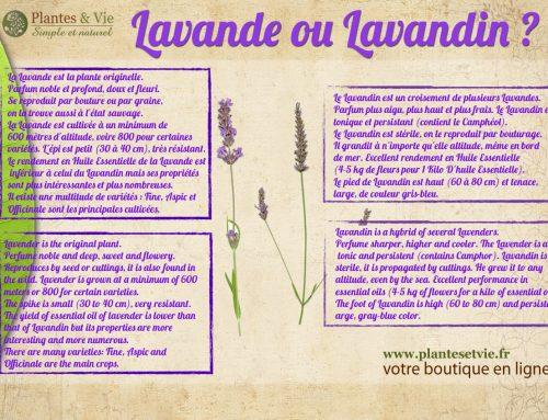 C'est quoi la différence entre la Lavande et Lavandin?
