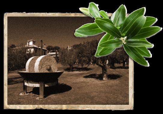 Presse olive